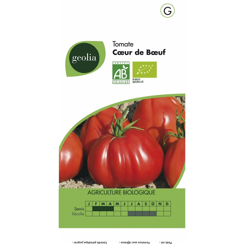 Tomate coeur de boeuf geolia leroy merlin - Serre a tomate leroy merlin ...