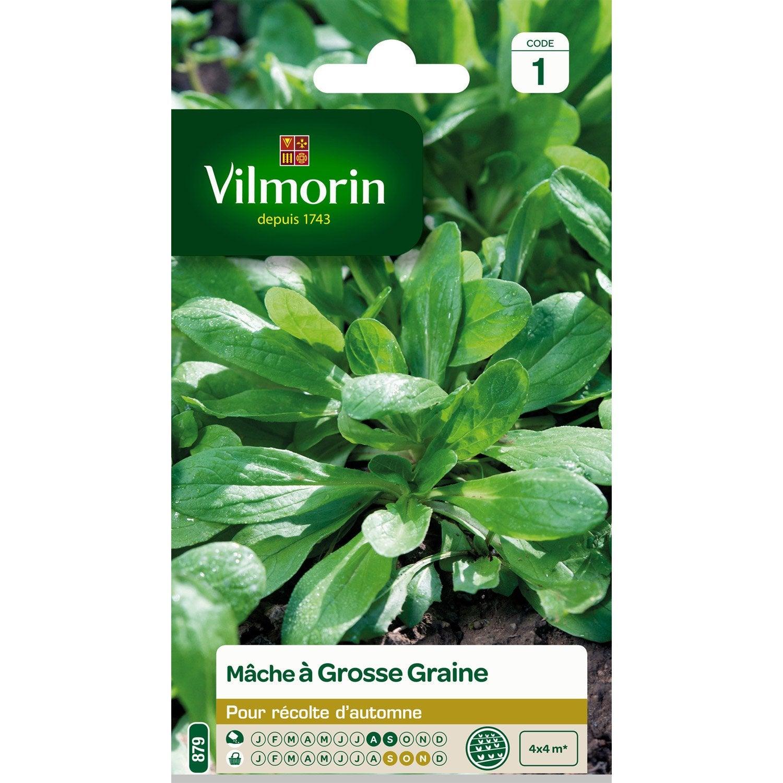 M che grosses graines vilmorin 4 g leroy merlin for Vilmorin graines