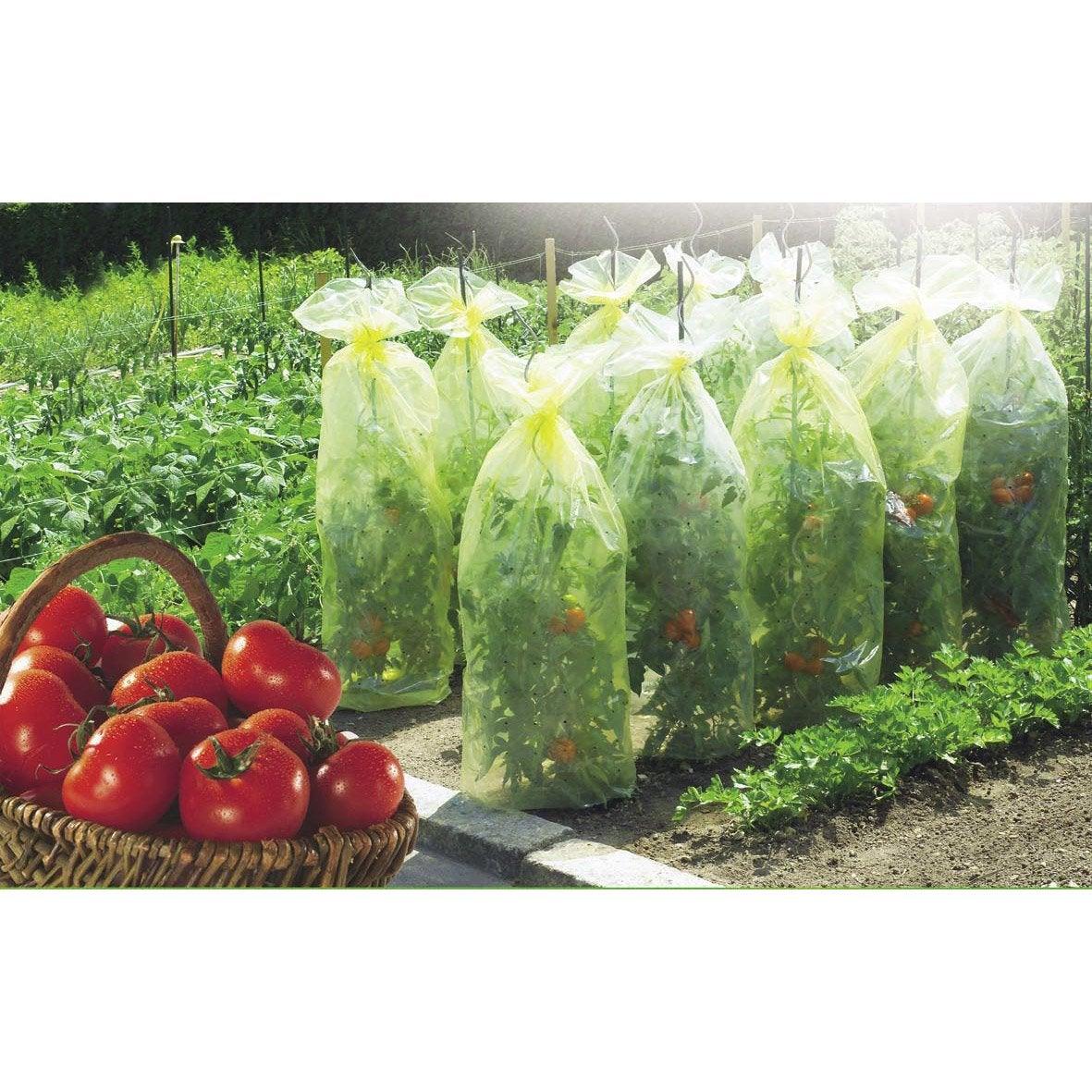 Housse de croissance tomate nortene leroy merlin - Tuteur tomate jardiland ...