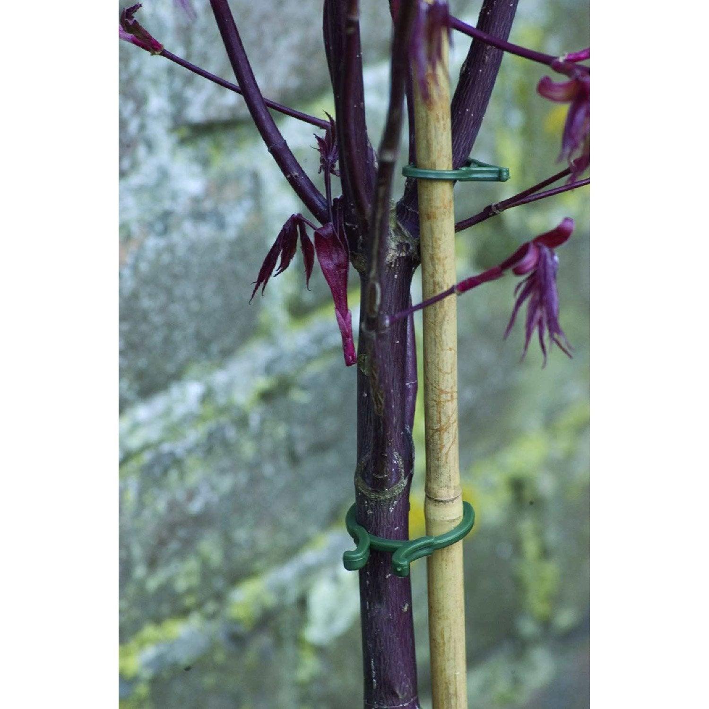 Fixe tiges anneaux pour plantes nortene leroy merlin - Leroy merlin plantes ...