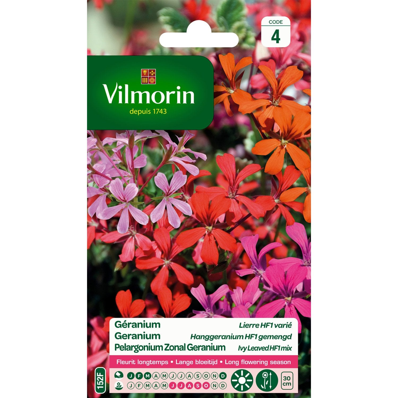 G ranium lierre songe d 39 t f1 vari multicolore leroy for Vilmorin graines