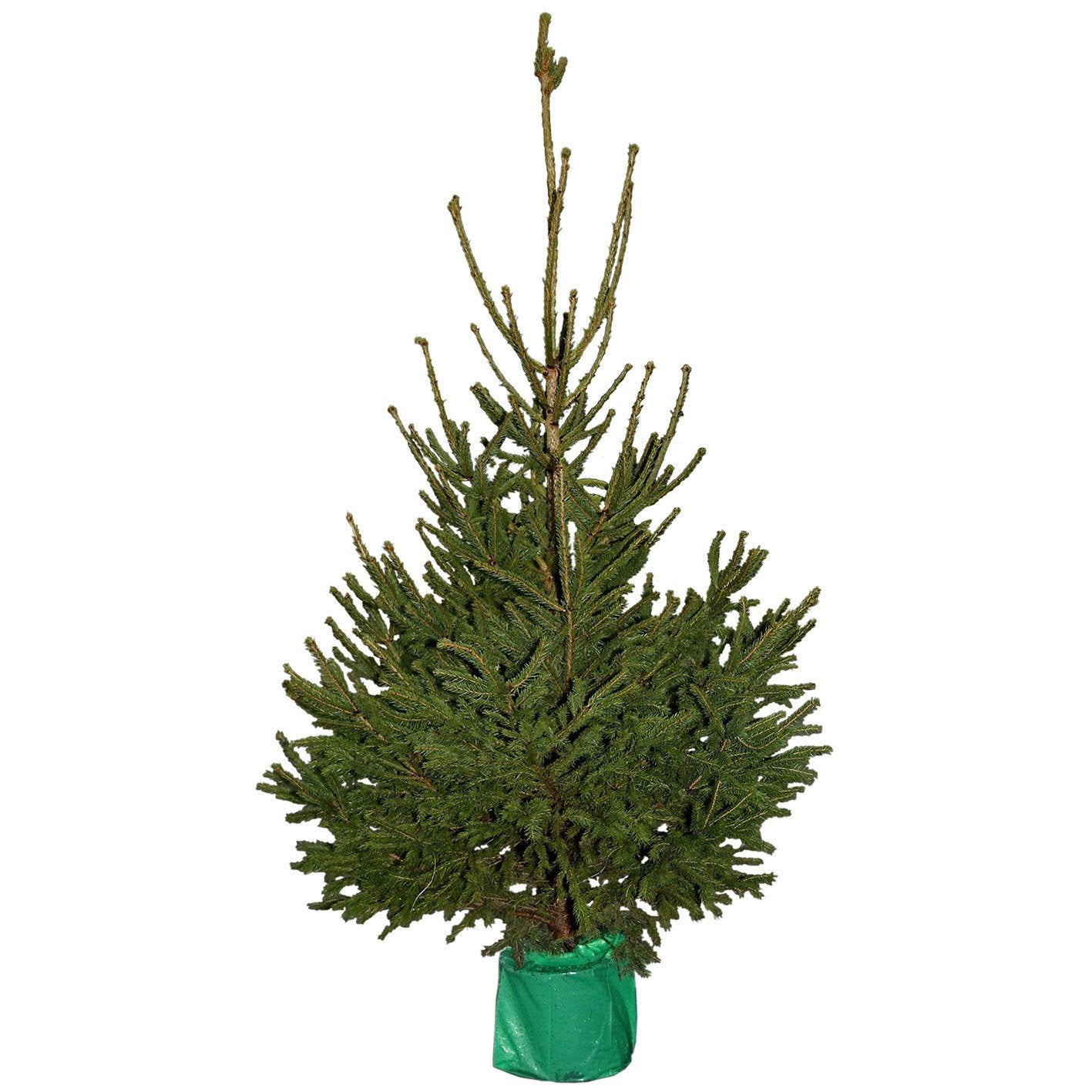 sapin de no l naturel epic a en pot hauteur de 100 125 cm leroy merlin