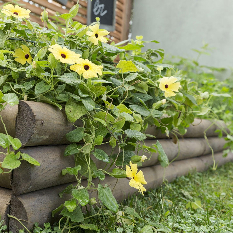Retenue de terre planter bois naturel x cm - Gazon en rouleau leroy merlin ...