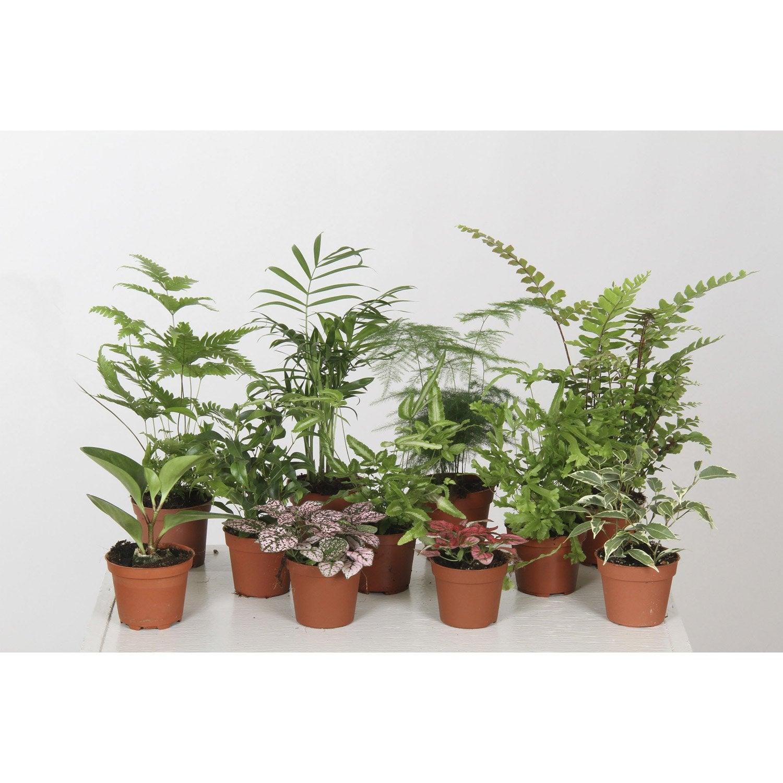 Mix de plantes leroy merlin - Leroy merlin plantes ...