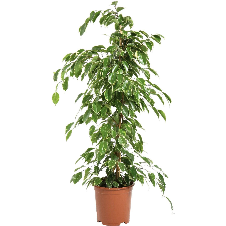 plantes vertes artificielles toulouse